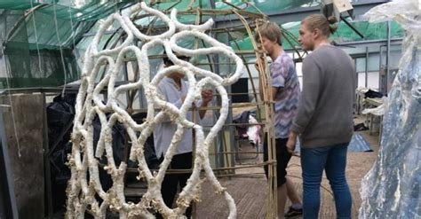 These amazing zero-waste buildings were grown from mushrooms