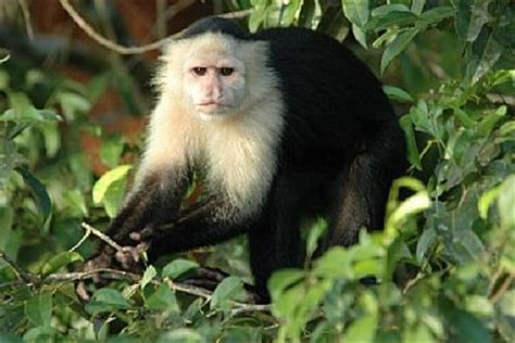 what type of monkey was spike on ace ventura? | Yahoo Answers