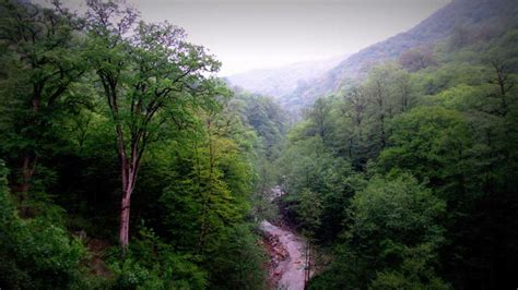 UNESCO Declares Iran's Hyrcanian Mixed Forests World
