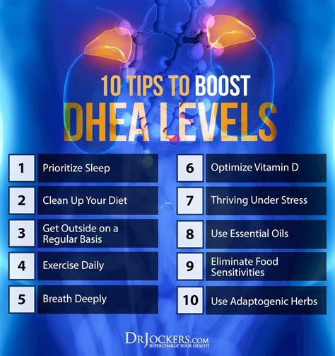 10 Tips to Boost DHEA levels For Healthy Skin and Hormones